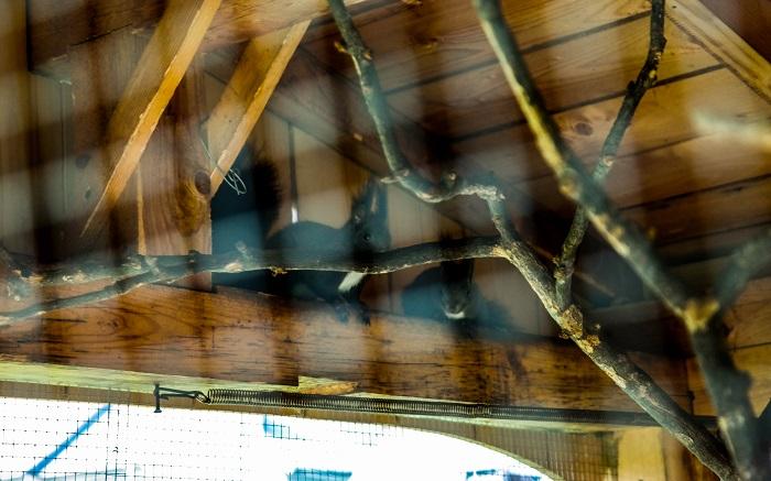 Veveritele de la cabana