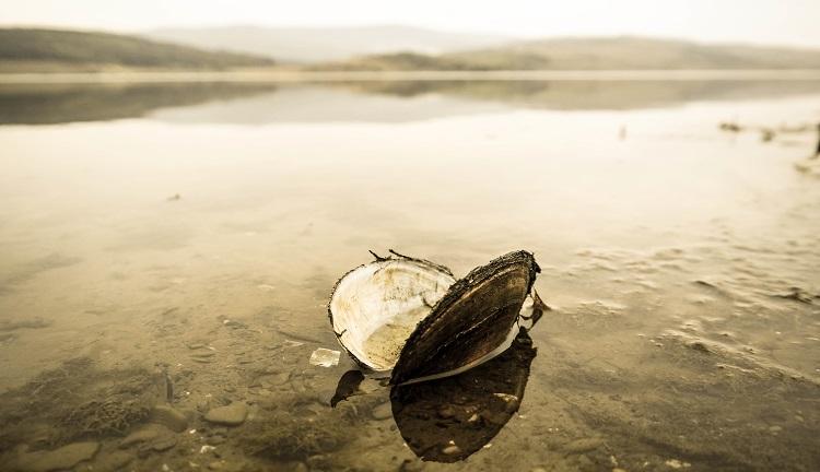 Scoica in lac